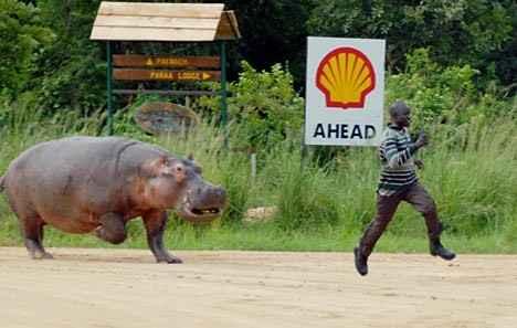 Humour Éléphant. Photos comiques d'éléphants rigolos, images insolites